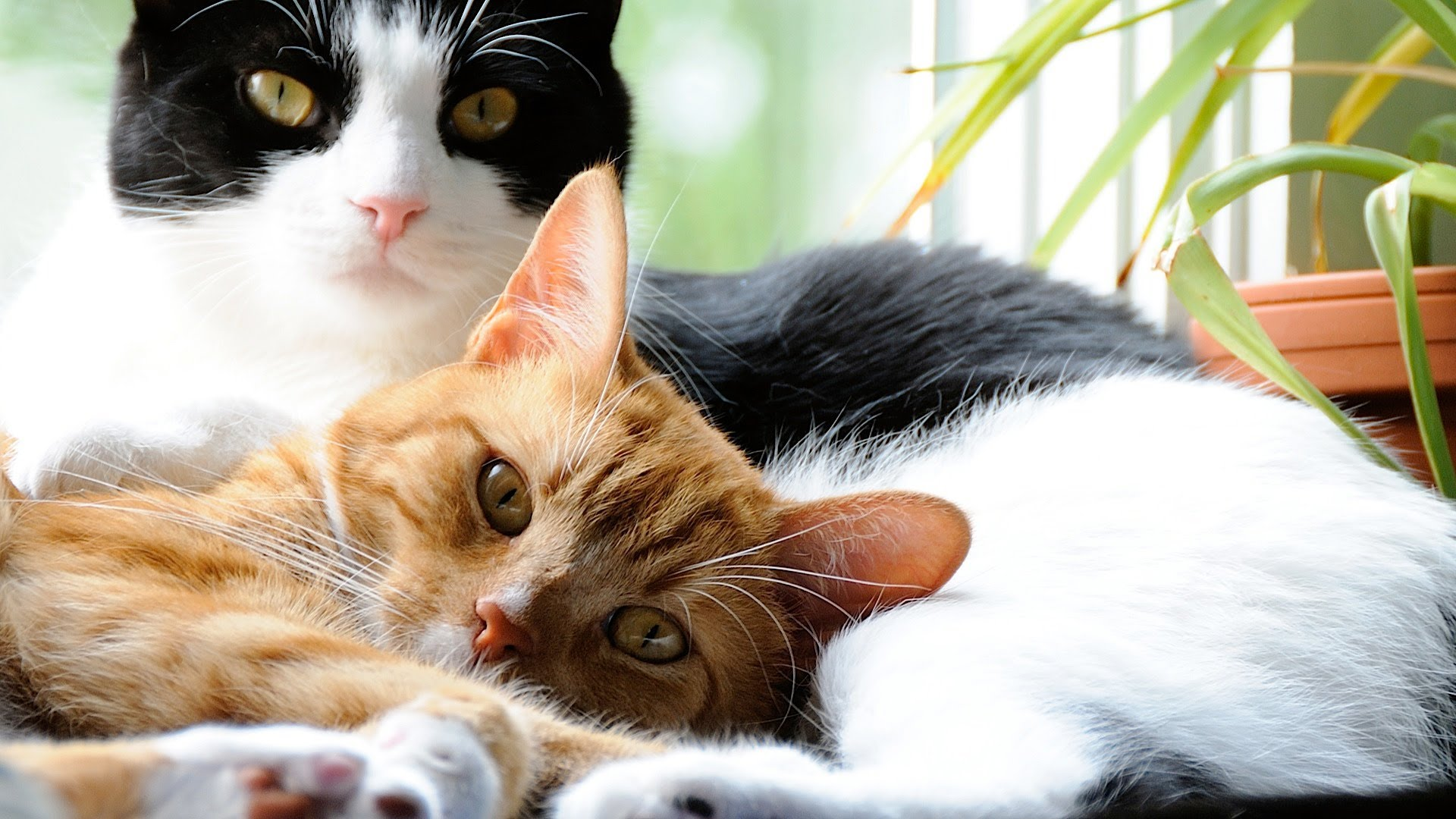 Best Ways to Treat a Cat With Upper Respiratory Issues
