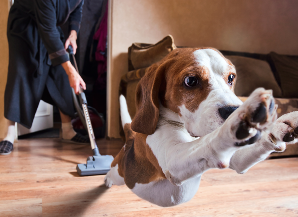 How to Choose The Best Pet Vacuum Cleaner?