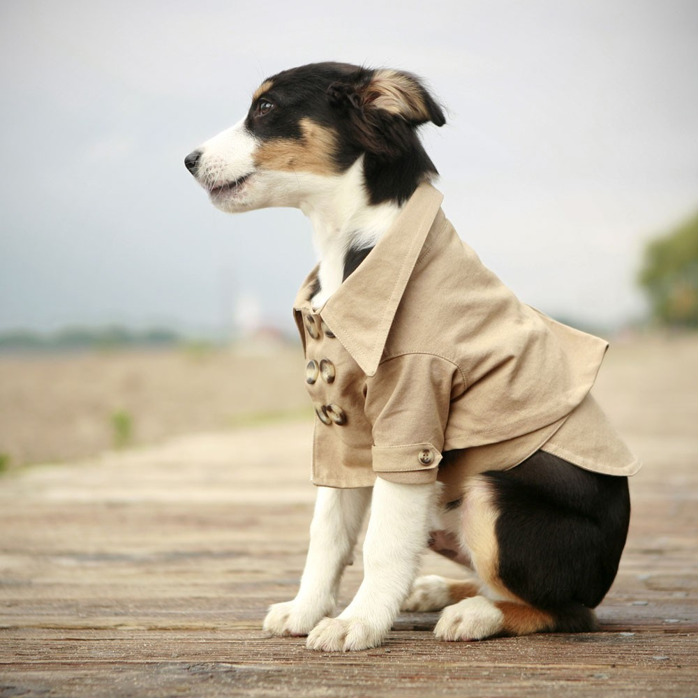 Dog Clothing to High-End Development