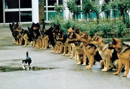 Learn How to Train Your GSD Here
