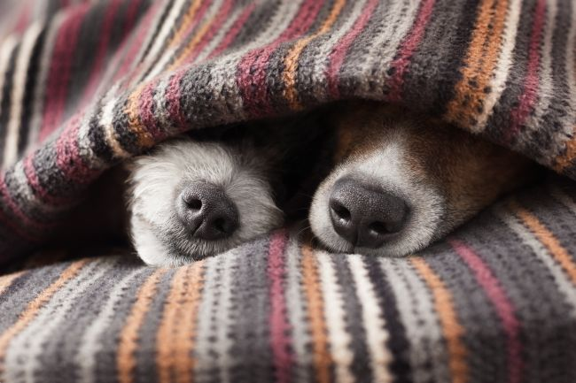 Snuggle Buddies for your Pet - Burrow Blanket