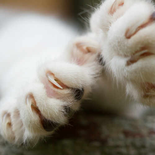 Declawing Cats - Is it Necessary?