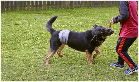 female dog diaper