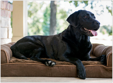 The Ultimate Dog Bed Buying Guide
