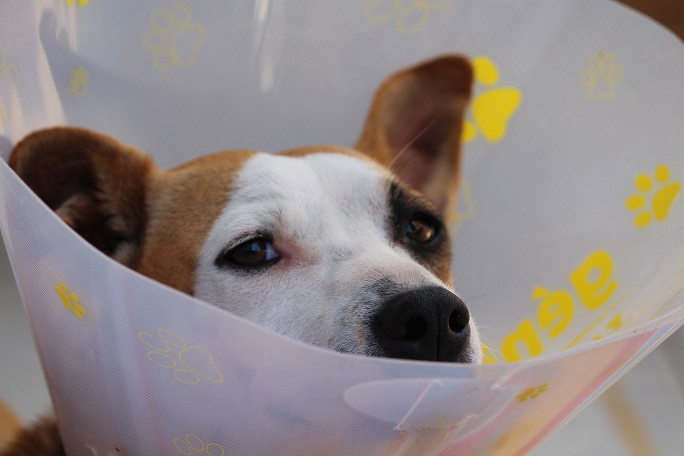 All You Need To Know About Bleeding Disorder In Dogs