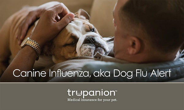 What you need to know about Canine Influenza, aka the Dog Flu