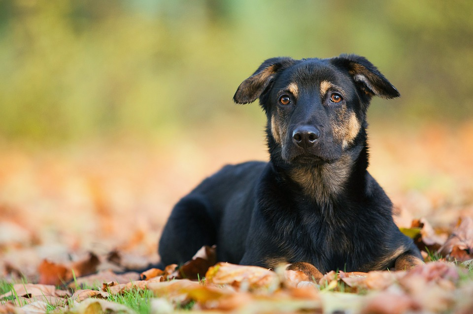 How To Tell If Your Dog Has Rabies