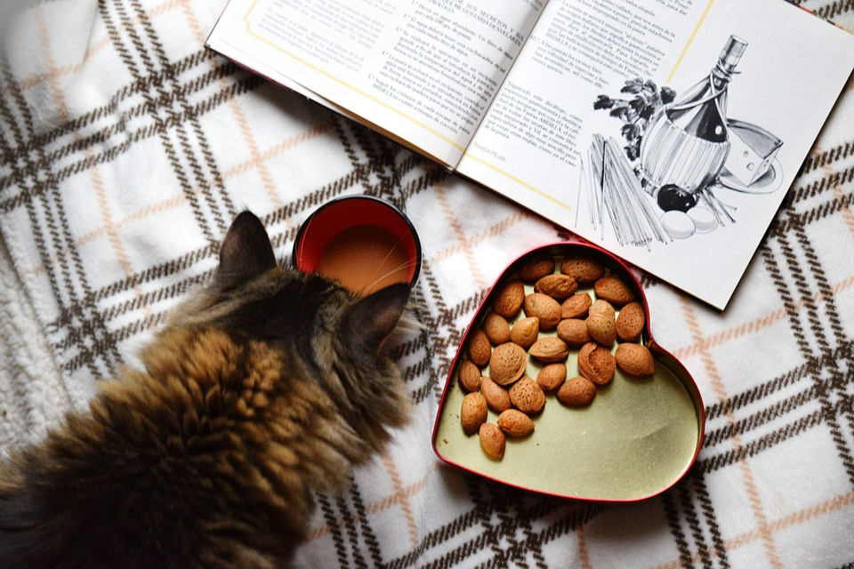 How Nutritional Needs Of Cats Differ From That Of Dogs
