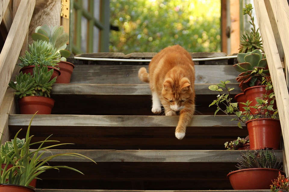 Is Your Cat Limping? This is Probably Why