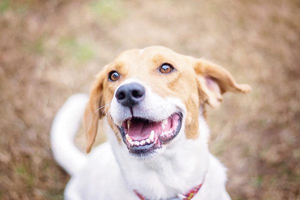 How Many Teeth Do Dogs Have? The Answer to That and Other Questions About Dog Teeth