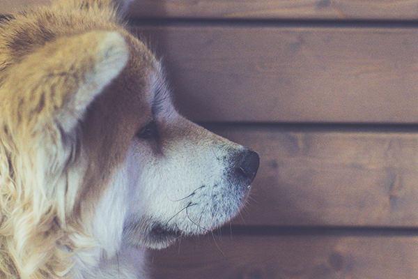 Head Pressing in Dogs — Don't Ignore the Signs