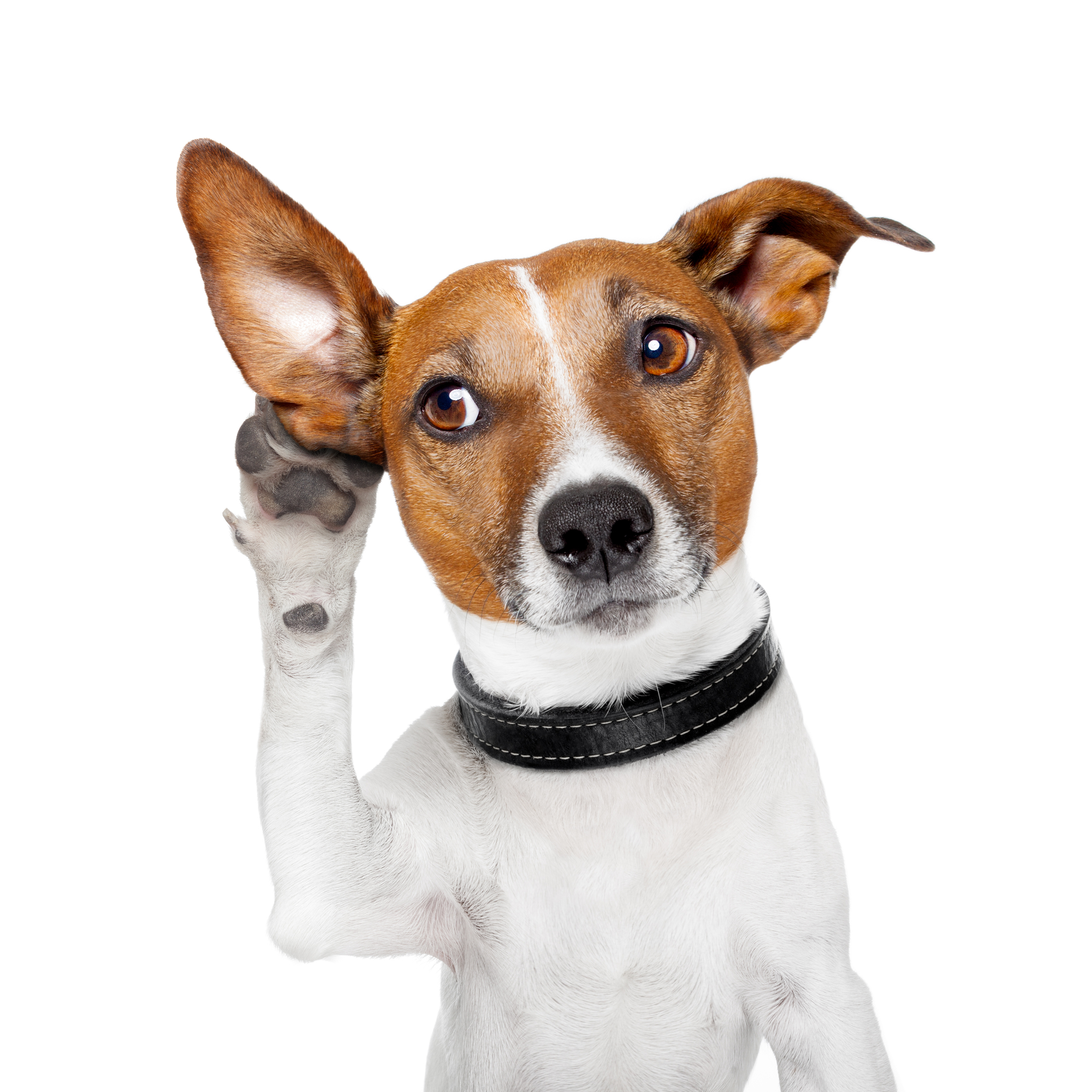 10 Essential Tips for Cleaning Your Dog's Ears