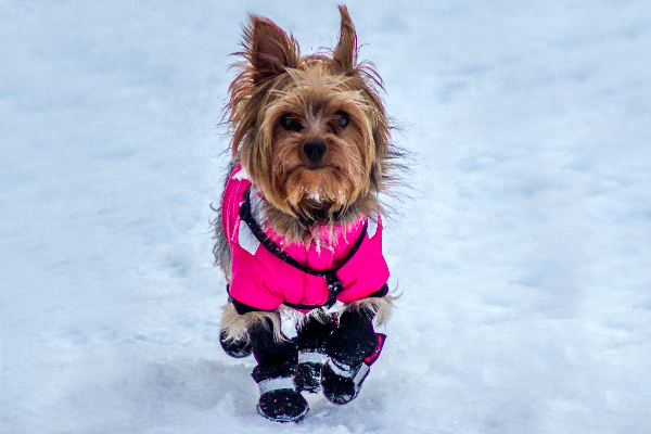 11 Different Types of Dog Coats And Jackets