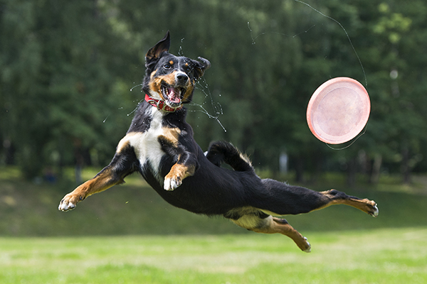 Dog Zoomies: Why They Happen and What to Do