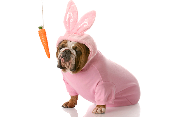 Can Dogs Eat Carrots? If So, Are Carrots Good for Dogs?