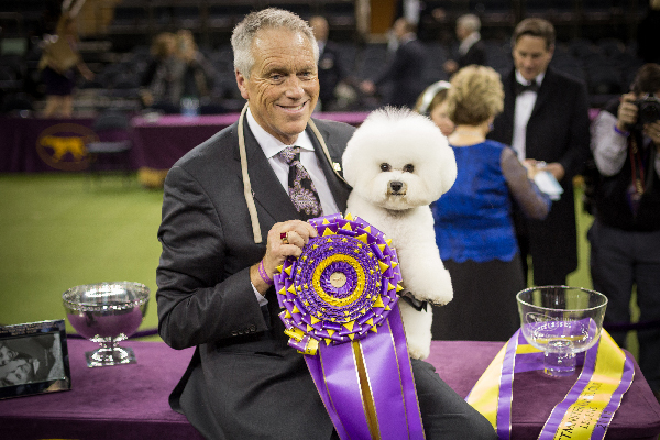 The Westminster Kennel Club Dog Show: Flynn the Bichon Frisé Wins, Biggie and Bean Charm, and More Highlights