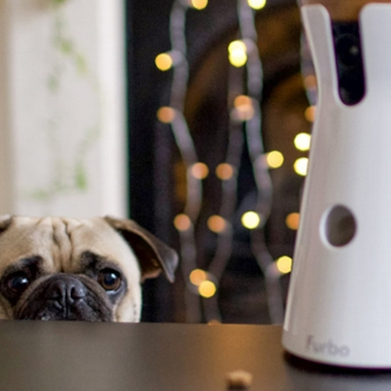 Keep a Watchful Eye on Your Pet with These Monitors
