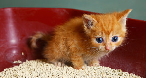 Best and Worst Spots to place Cat Litter Box in your home.
