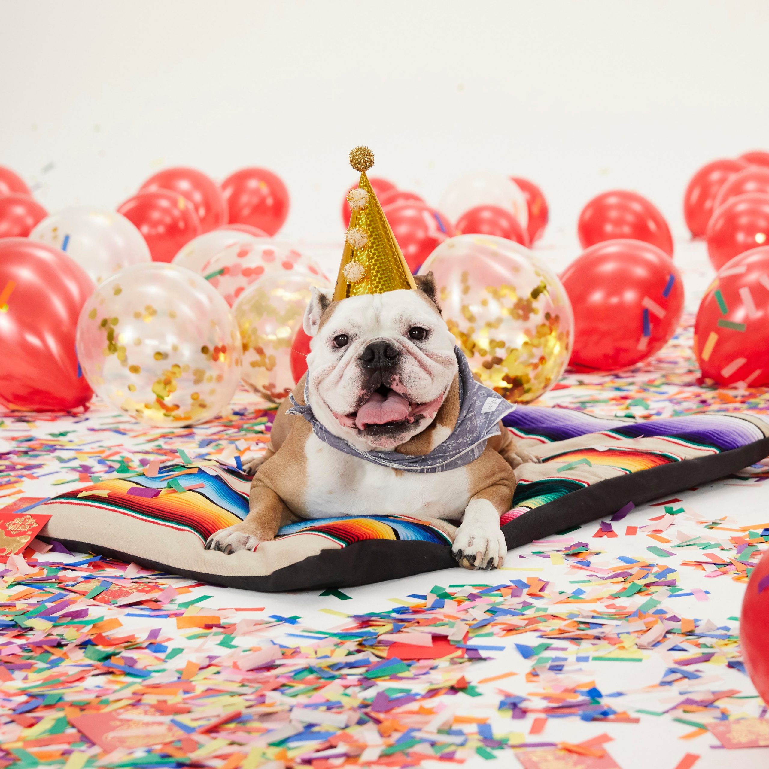 Meet the Rover Office Dogs Featured in Nordstrom's Year of the Dog Campaign