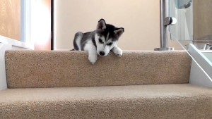Why Some Dogs Are Afraid Of Stairs & Ways to Help Them Overcome It.
