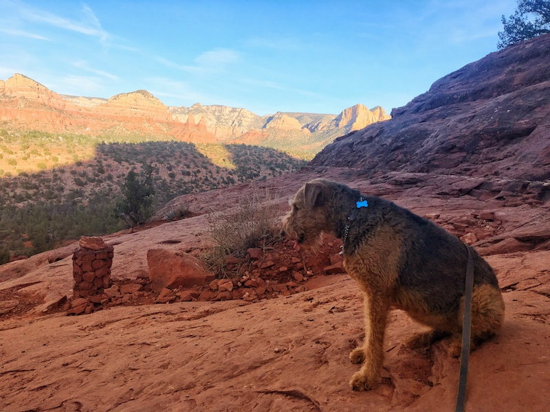 7 Essentials For Desert Hiking With Your Dog