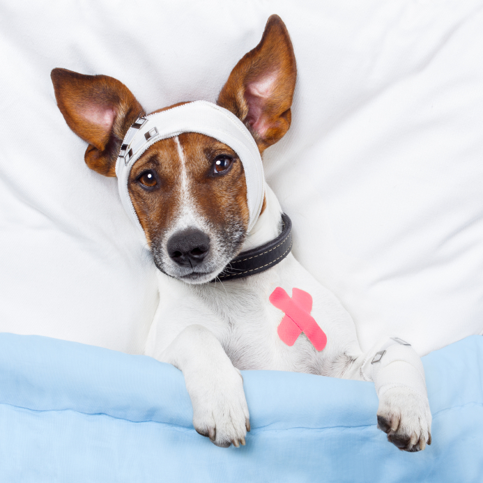 Canine Influenza: What You Need to Know Before Traveling With Your Dog