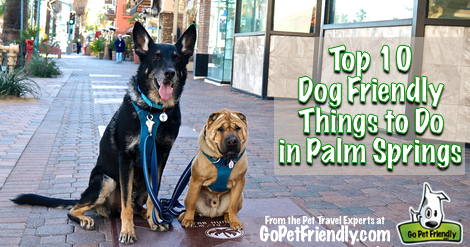 Top 10 Dog Friendly Things To Do in Palm Springs