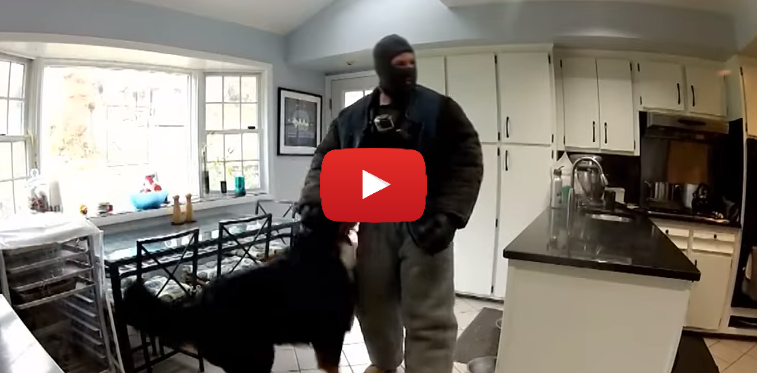 Watch This Fake Burglar Break Into a Home To See How Dogs Will React