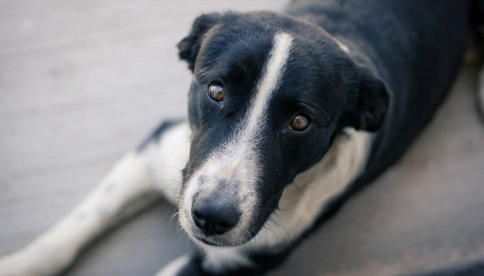 5 Myths About Managing Separation Anxiety in Dogs