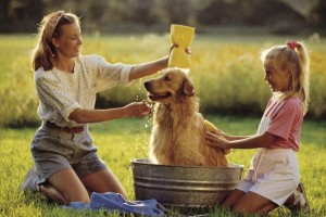 Dog Shampoos on your shopping list?. Choose wisely.