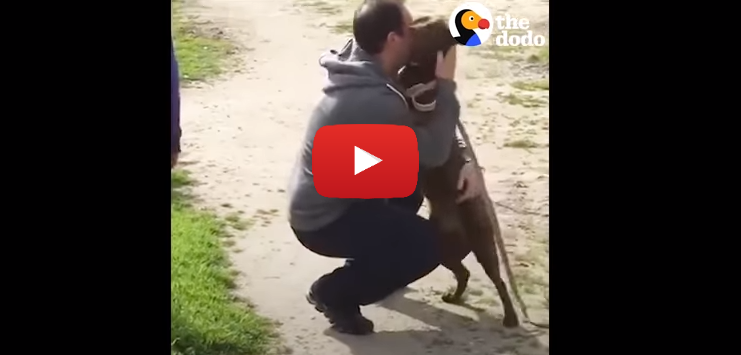 Dog Reunited with Owner Slowly Recognizes Dad After Years in Shelter