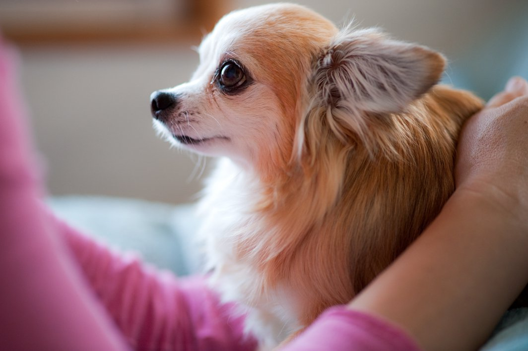 12 Sweet And Easy Ways to Shamelessly Buy Your Dog's Love