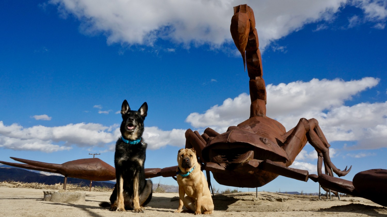 Borrego Springs: A Dog Friendly Day Trip