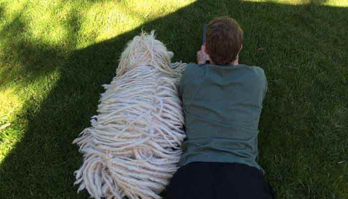 Mark Zuckerberg Likes The Dog With Dreadlocks