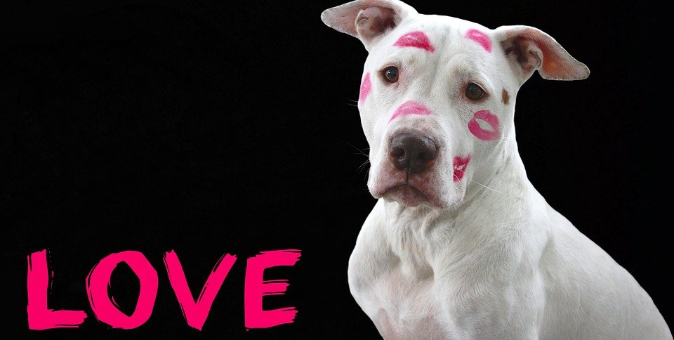 Quiz: What's Your Dog's Love Language?