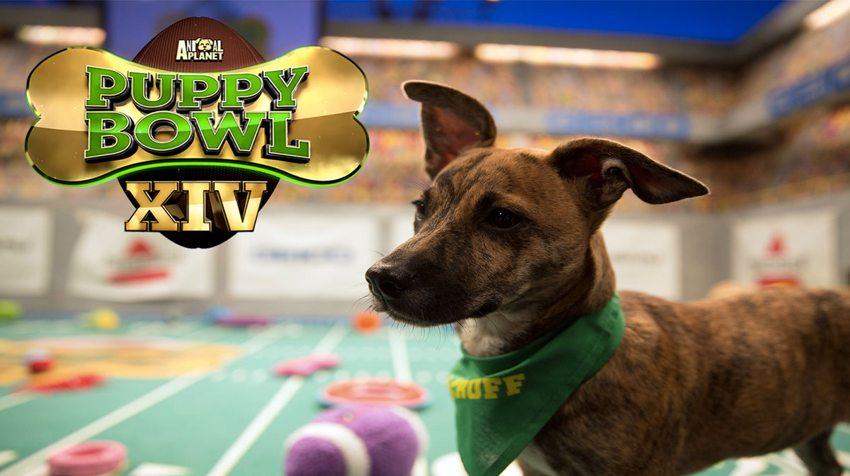 Puppy Bowl XIV Introduces 'Dog Bowl' for Adoptable Adults, Trading Cards
