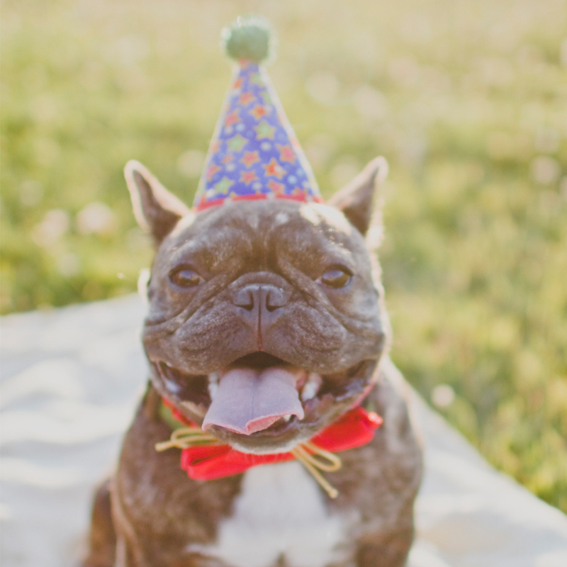 Puppy Party! How to Throw a Birthday Bash for Your Dog