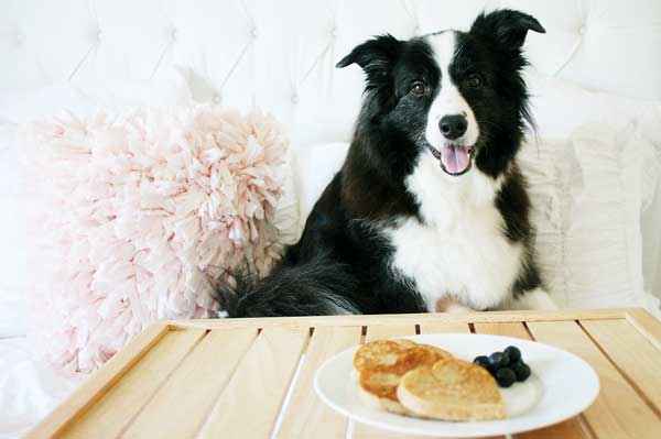 Make Valentine's Day Puppy Pancakes for Your Dog!