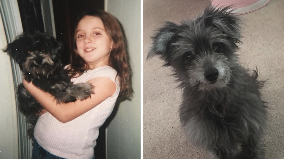 Woman Unknowingly Adopts the Childhood Dog She Was Forced to Give Up