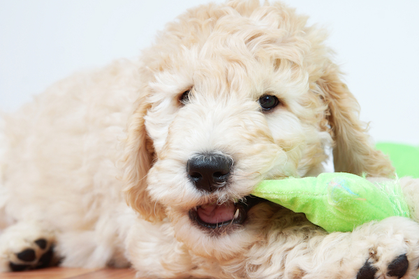 How to Prevent Dog Teeth Problems at Every Stage of Your Canine's Life