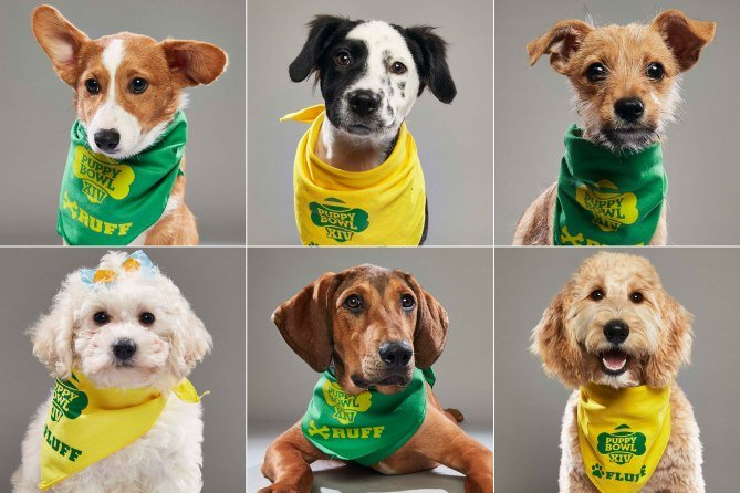 Puppy Bowl XIV Features Some of the Cutest MVPs You Ever Saw