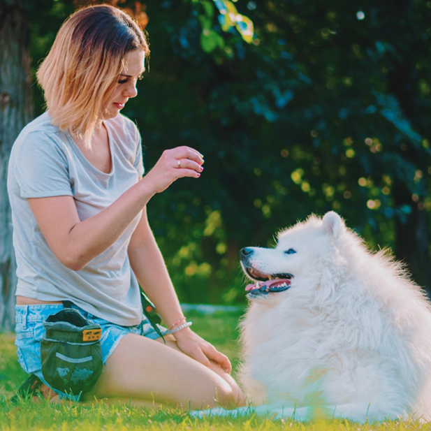 6 of Our Favorite Dog Training Tips