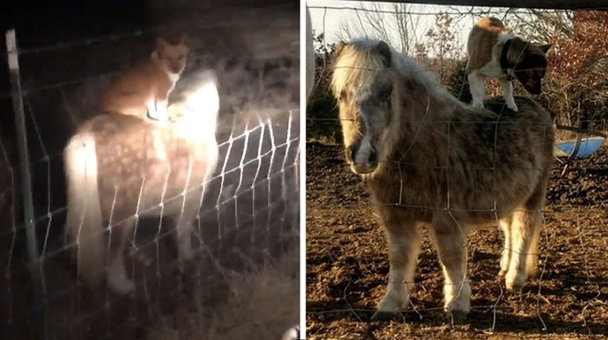 Family Amazed to Find Their Pony Giving Rides to The Neighbor's Dog [Video]