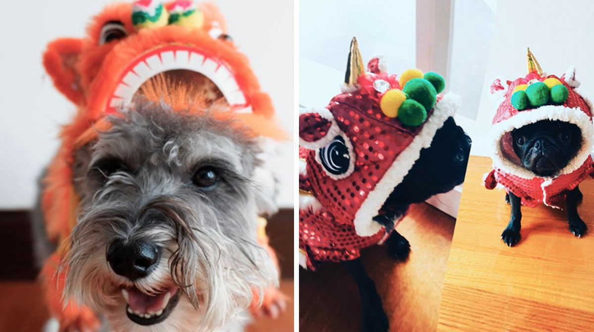8 Dogs Dressed As Lion Dancers to Celebrate Year of the Dog