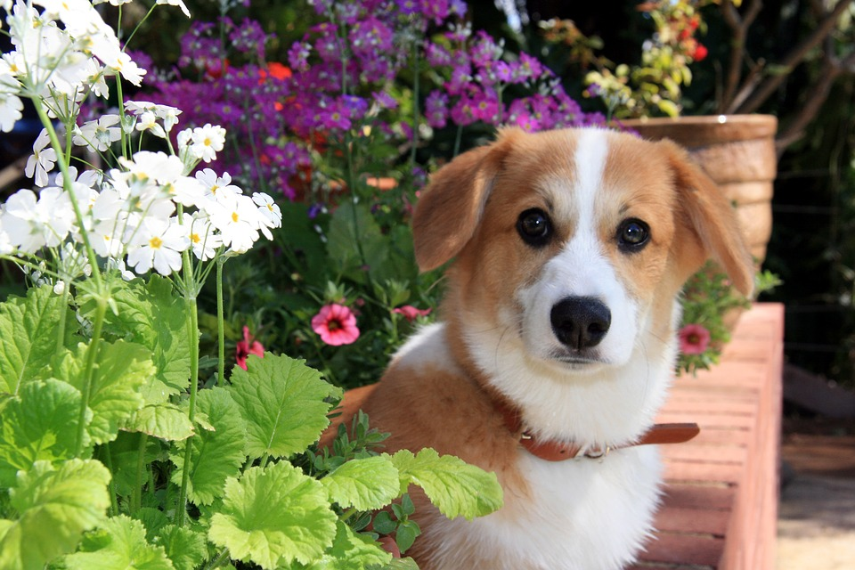 Spring Is Here! Here's How to Care For Your Pet