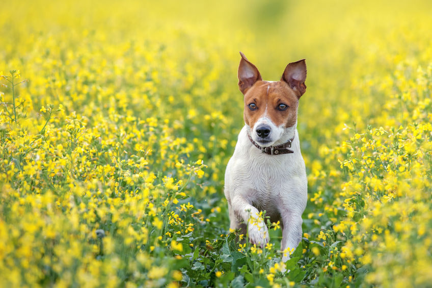 5 Little-Known Supplements That Benefit Dogs
