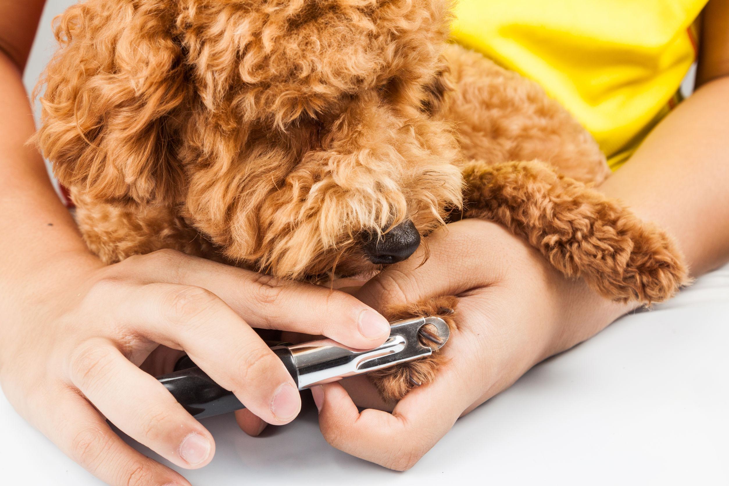 11 Health Benefits of Good Dog Grooming
