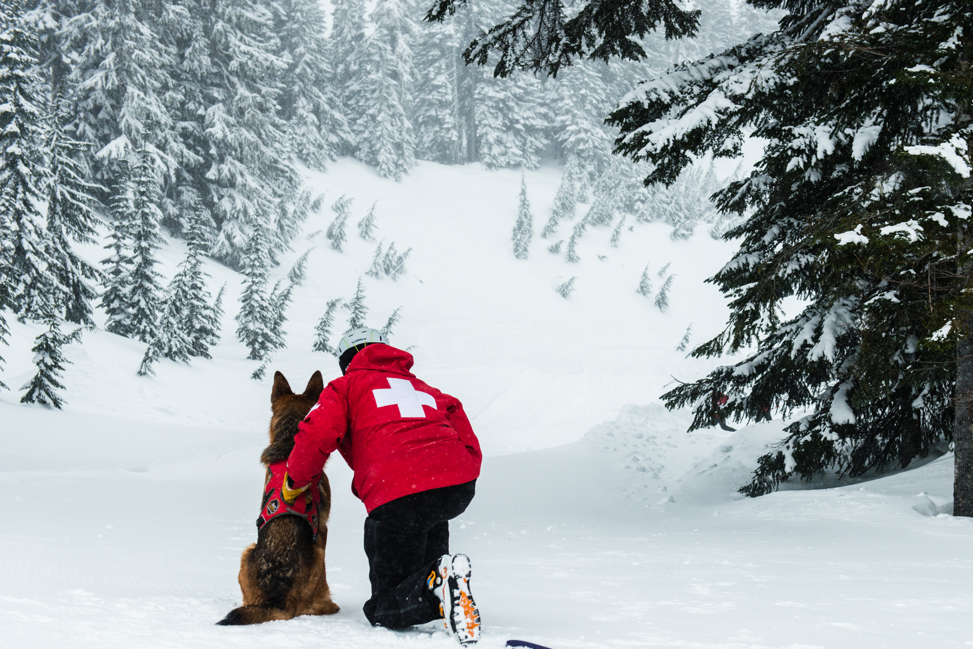 Unique Training Teaches These Avalanche Dogs to Save Lives