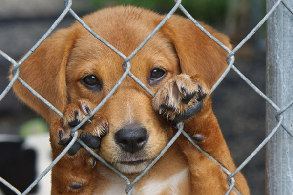 Dognapping: How to Protect Your Dog and Get Him Back If He's Stolen