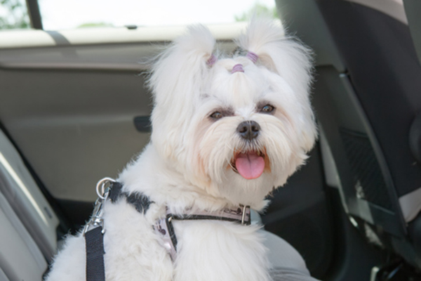 Dog Car Safety: 10 Things NOT to Do